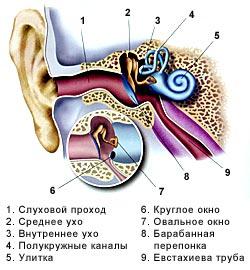 как продувать уши. строение органов слуха